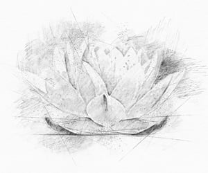 drawing, waterflower, and floralart image