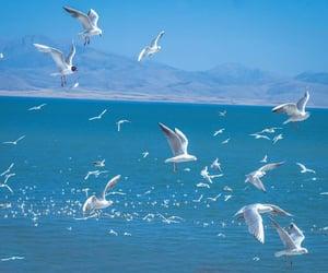 beach, photo, and birds image