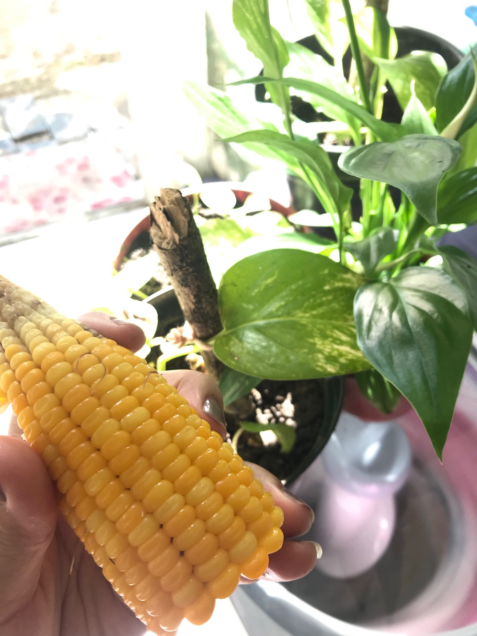 aesthetic, autoral, and corn image