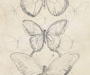 butterfly, aesthetic, and archive image