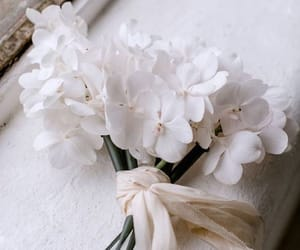 flowers, spring, and white image