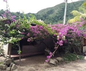 aesthetic, arboles, and flowers image