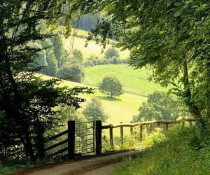 nature, green, and cottagecore image