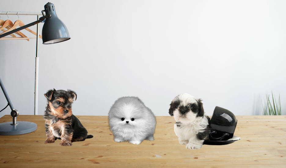 article, dogs, and teacup dogs image