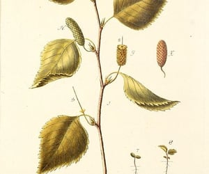 trees, shurbs, and pictorial works image