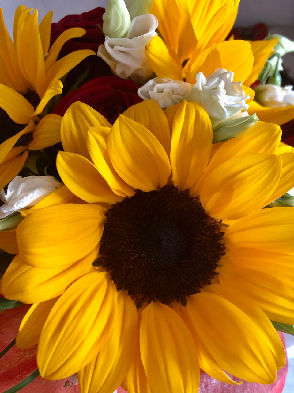 flowers, spring, and sunflowers image