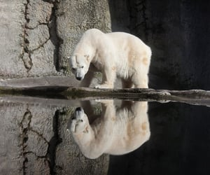 Polar Bear, places to travel, and portland image