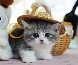 kitten, 🐾, and 🐈 image