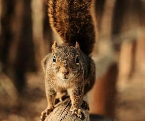Animales, ardilla, and naturaleza image