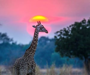 Animales, atardecer, and belleza image