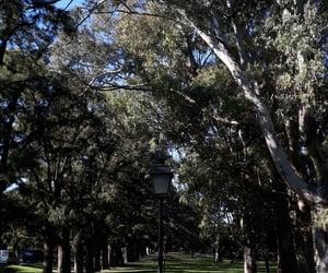 arboles, naturaleza, and parque image