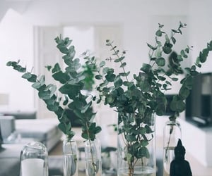 Prettiest Eucalyptus Stems | Pinterest