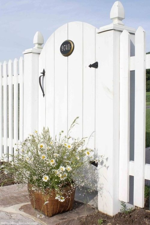 daisies, gate, and white picket fence image