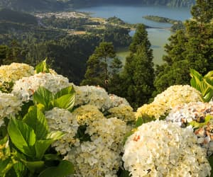 flowers, portugal, and sao miguel image