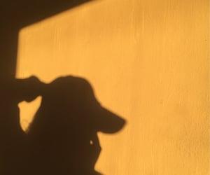 goldenhour image