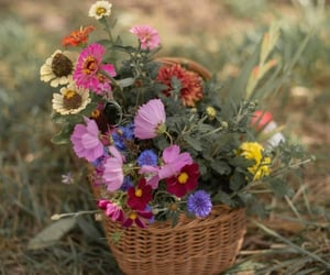 beautiful, flowers, and natural image