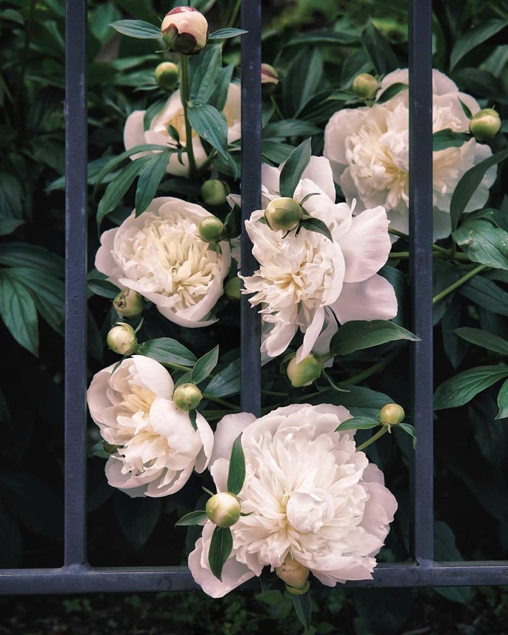 flowers, white, and aesthetics image
