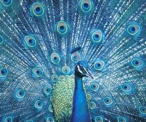 animals, birds, and blue image