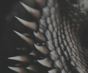 dragon, scales, and magical creature image