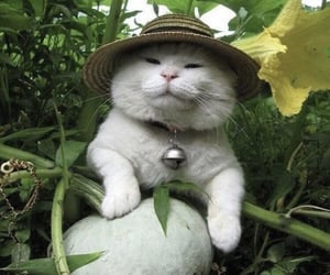 cat, green, and nature image