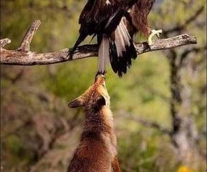 A curious fox finds a new friend?