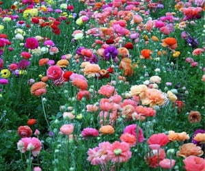 flowers, spring, and colors image