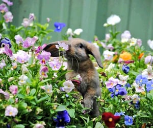 flowers, bunny, and rabbit image