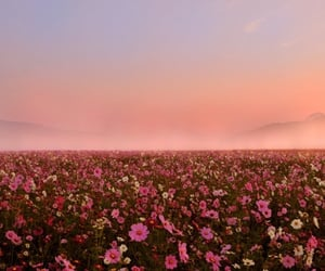 adventure, aesthetic, and field flowers image
