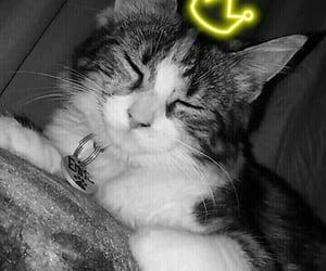 cat, snapchat, and Algeria image