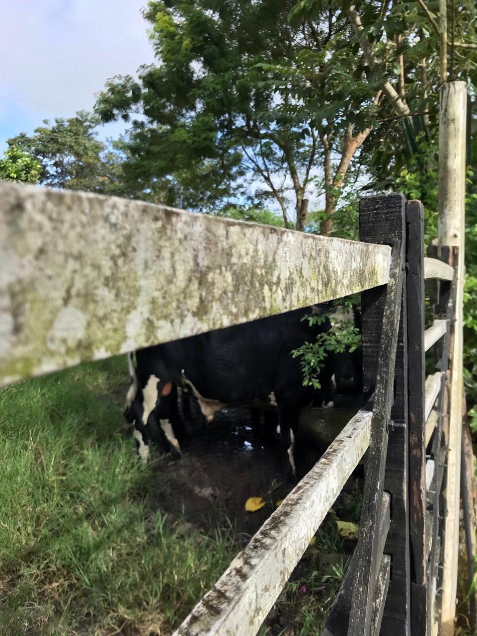 autoral, farm, and inspiration image