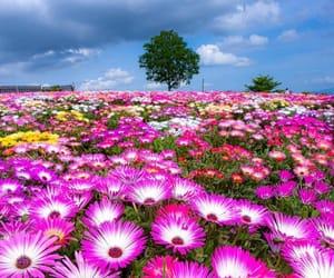 Spring in Japan is simply beautiful