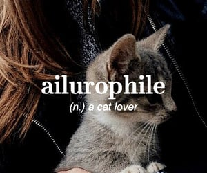 noun, ailurophile, and lover of cats image