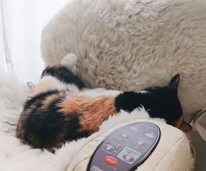 usamix_1974 ゲリラ豪雨寝。#hug_cat
