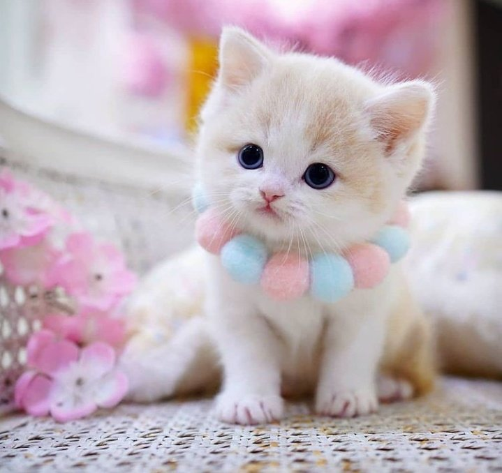 kitten, marshmallow, and necklace image