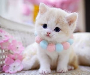 a lovely kitten with marshmallow necklace
