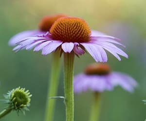 Download Phone wallpaper flowers, petals, plant phone background