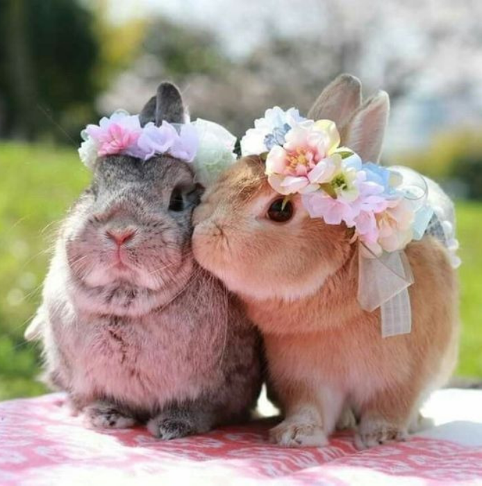bunny, cute, and animals image