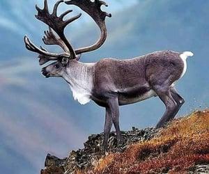 Elk on the precipice