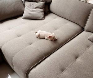 adorable, baby, and small dog image
