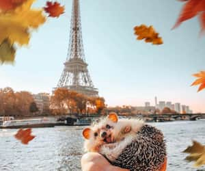 a smiling hedgehod in his owner's hand