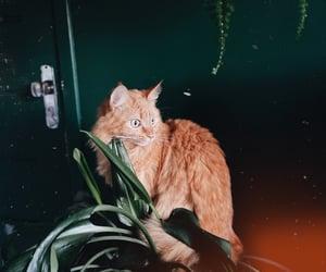35mm, cat, and kodak image