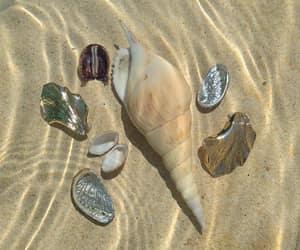 ракушки песок image