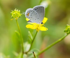 butterfly, flower, and insect image