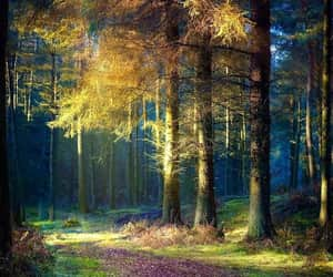 exteriores, paisajes, and forest image