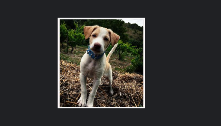 article, dog, and portugal image