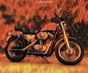 harley davidson, street photography, and motorcyclist image