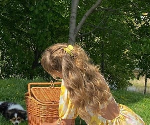 nature, dog, and picnic image