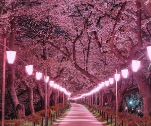 arboles, pink, and pink lights image