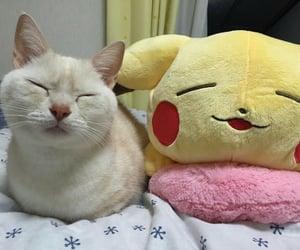 cat, pikachu, and cute image