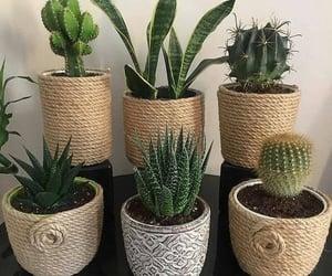 beautiful, boho, and cactus image